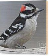 Downy Woodpecker Wood Print