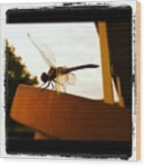Dragon Fly Wood Print by Dana Coplin