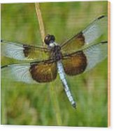 Dragon Fly Grass Wood Print