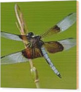 Dragon Fly Green Wood Print