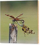 Dragon Fly Love Wood Print