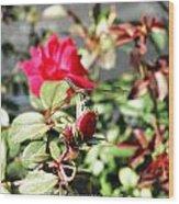 Dragon Fly Rose Bud  Wood Print
