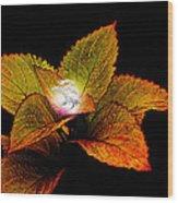 Dragon Plant Patronus Wood Print by Michael Taggart