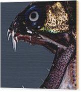 Dragonfish Mouth Wood Print