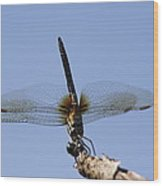 Dragonfly - Handstand Wood Print