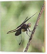 Dragonfly - Yellow Stripe Wood Print