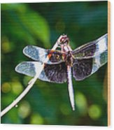 Dragonfly 0002 Wood Print