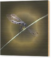 Dragonfly 1 Wood Print