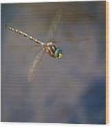 Dragonfly 2012 Wood Print