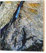 Dragonfly Blue Wood Print by Maria Scarfone