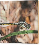 Dragonfly Closeup Wood Print