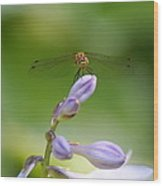 Dragonfly Connection Wood Print