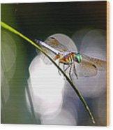 Dragonfly Dance Wood Print