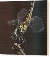 Dragonfly Handstand Wood Print