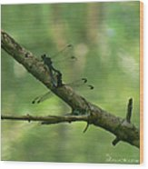 Dragonfly Hanky Panky Wood Print