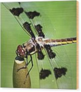 Dragonfly In Black 2 Wood Print