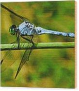 Dragonfly Wood Print by Jack Zulli