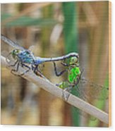 Dragonfly Love Wood Print