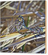 Dragonfly Love Wood Print