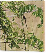 Dragonfly Lunch Wood Print