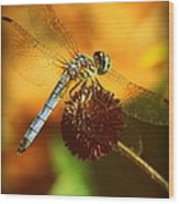 Dragonfly On A Dried Up Flower Wood Print