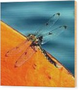 Dragonfly On A Paddle Wood Print