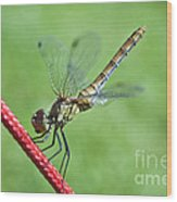 Dragonfly On A String Wood Print