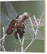 Dragonfly On The Tree Wood Print