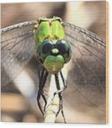 Dragonfly Perspective Wood Print by Carol Groenen