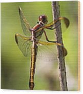 Dragonfly Photo - Yellow Dragon Wood Print