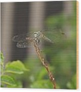 Dragonfly Smile Wood Print