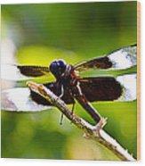 Dragonfly Stalking Wood Print