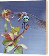 Dragonfly Visit Wood Print