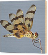 Dragonfly With A Little Girl's Face Wood Print