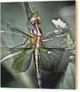 Drangonfly Wood Print