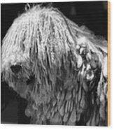 Dreadlock Dog Wood Print