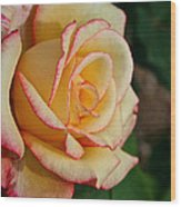 Dream Come True Grandiflora Wood Print