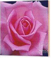 Dream Rose Wood Print