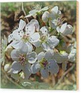 Dreams Of Pear Blossoms Wood Print