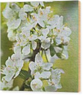 Dreamy Blossom. Wood Print
