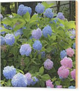 Dreamy Blue And Pink Hydrangeas Wood Print