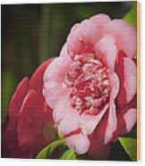 Dreamy Camellia Wood Print