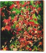 Dreamy Fall Leaves Wood Print