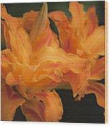 Dreamy Kwanso Daylily Pair Wood Print
