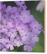Dreamy Lavender Phlox Wood Print