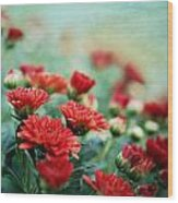 Dreamy Red Mums Wood Print
