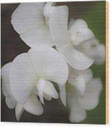 Dreamy White Sweet Pea Squared Wood Print