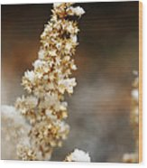 Dried Flower And Crystals Wood Print