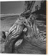 Driftwood On Beach Wood Print by Steven Ainsworth