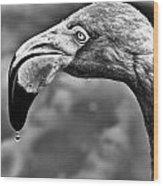 Dripping Flamingo - Bw Wood Print